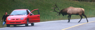 Keep your distance from wildlife